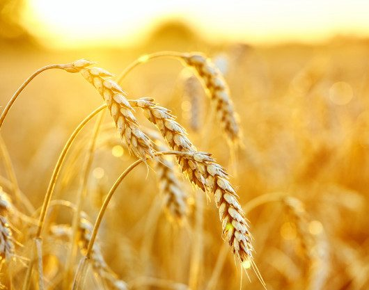 For Approval: Draft CARICOM Regional Standard For Wheat Flour