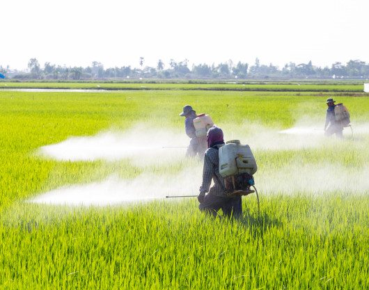 For Public Comment: Draft CARICOM Regional Standard For Pesticides Labelling